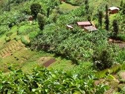Eine Landschaft mit kleinen Bauernhöfen und Feldern
