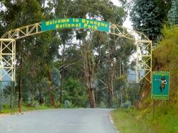 Ein Bogen mit dem Schild Nyungwe Nationalpark spannt sich über eine Straße, rechts davon zeigt ein Schild einen Schimpansen