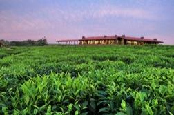 Inmitten einer Teeplantage liegt im Abendrot ein ebenerdiges, großes Gebäude