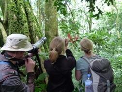 Drei Touristen schauen mit Ferngläsern Richtung Dickicht