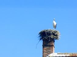 Ein Storch steht auf seinem Nest am Rauchfang