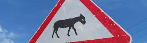 Vor Eseleien auf der Karpas-Halbinsel sei gewarnt