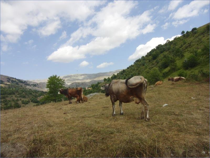 Natur pur - nur wenige Kilometer entfernt von Bosniens Hauptstadt Sarajevo (Foto: M.Bauer)