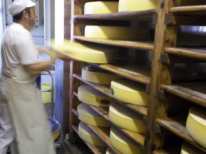 Der Käsemeister wirft die wagenradgroßen Käselaibe in das Lagerregal
