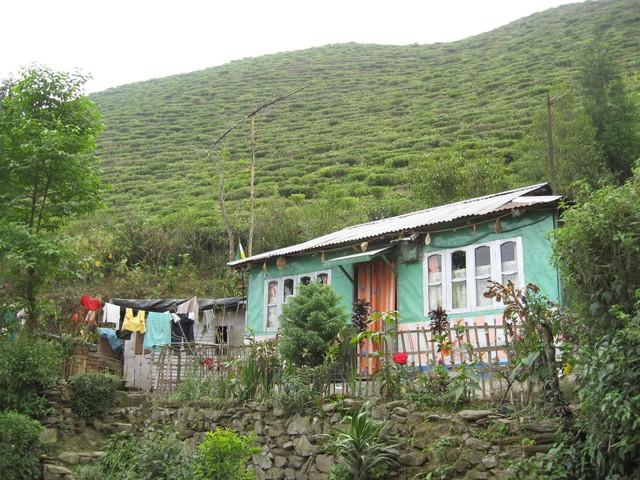 Die Arbeiter und Arbeiterinnen leben in kleinen Dörfern mitten im Teegarten